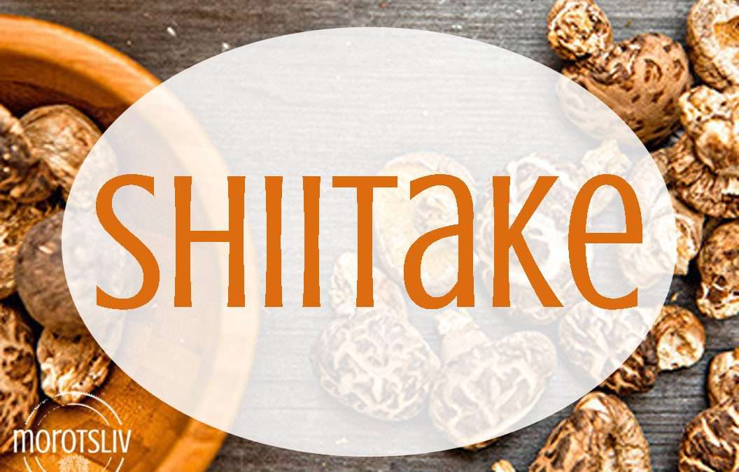 Shiitake