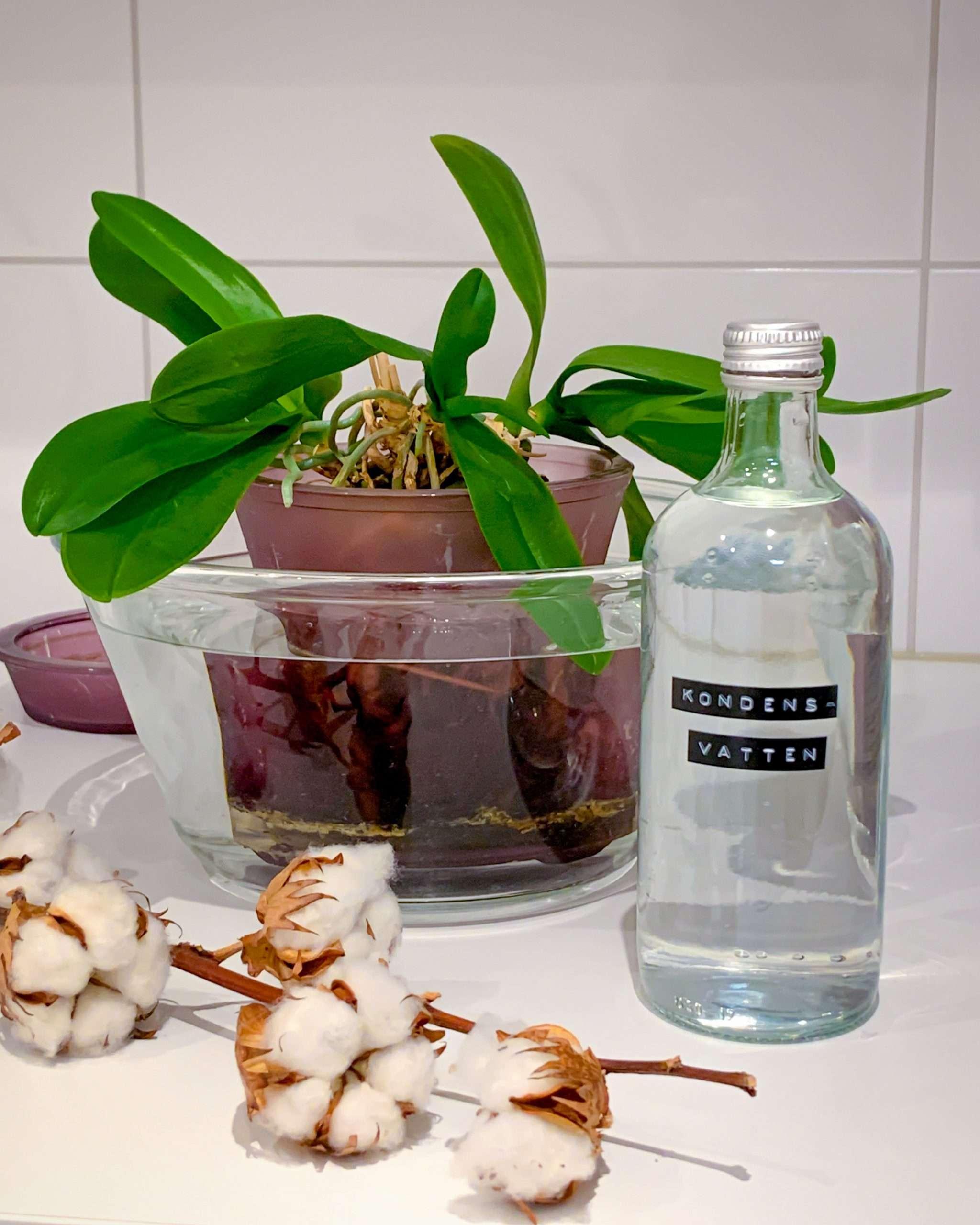 torktumlarens kondensvatten för orkidé